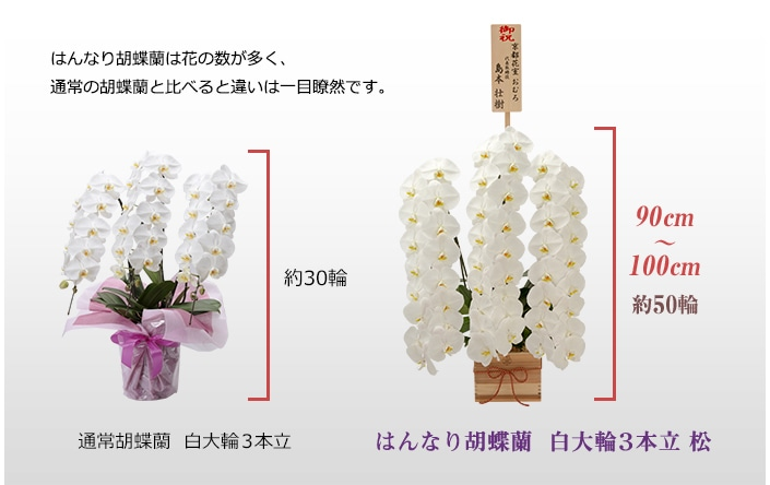 はんなり胡蝶蘭は花の数が多く、通常の胡蝶蘭と比べると違いは一目瞭然です。