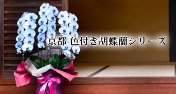 色付き胡蝶蘭シリーズ エレガンス