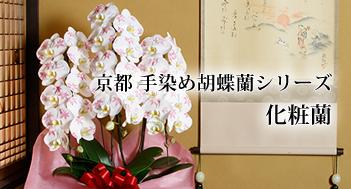 京都手染め胡蝶蘭シリーズ 化粧蘭