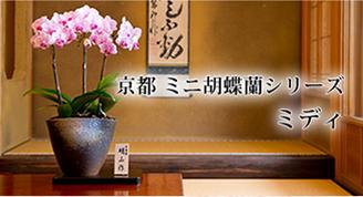 京都 ミニ胡蝶蘭シリーズ ミディ