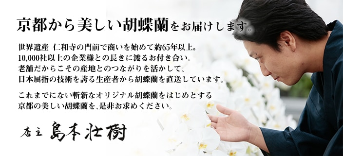 京都から美しい胡蝶蘭をお届けします