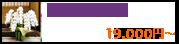 大型胡蝶蘭(白大輪)
