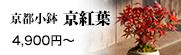 京都小鉢シリーズ 京紅葉