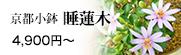 京都小鉢シリーズ 睡蓮木