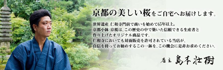 京都の美しい桜をご自宅へお届けします