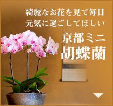 綺麗なお花を見て毎日元気に過ごして欲しい 京都ミニ胡蝶蘭