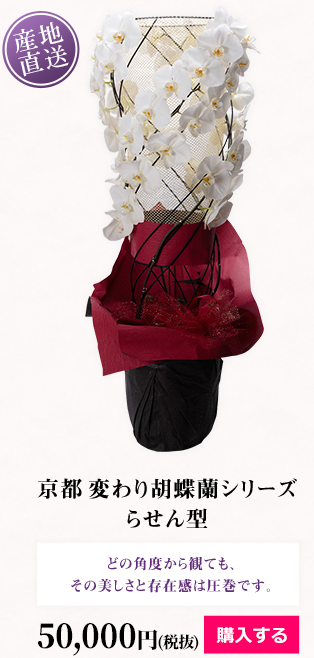 京都 変わり胡蝶蘭シリーズ らせん型