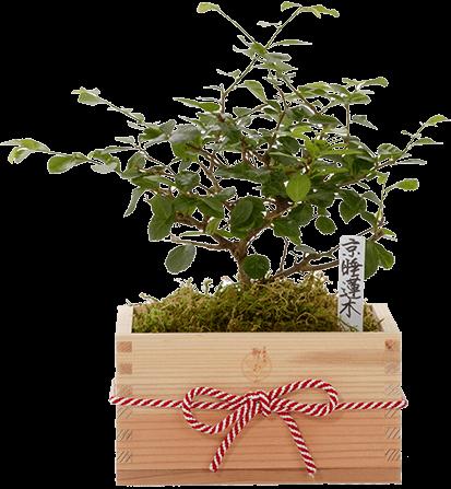 Kyoto Kitayama-Sugi(Japanese cedar)Special Wooden Box