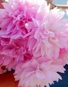 しだれ桜(しだれざくら)