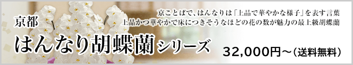 京都はんなり胡蝶蘭シリーズ