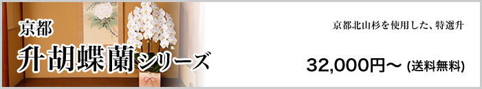 京都 升胡蝶蘭シリーズ