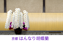 京都 はんなり胡蝶蘭シリーズ