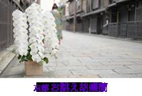 京都 お誂え胡蝶蘭シリーズ
