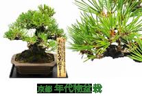 京都 年代物盆栽シリーズ