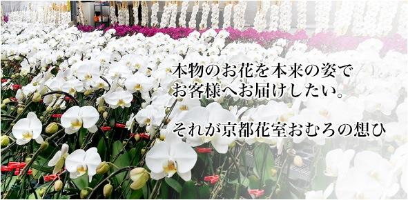 本物のお花を本来の姿でお客様へお届けしたい。