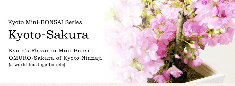 Kyoto Mini-BONSAI Series Kyoto-Sakura