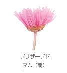 プリザーブド/マム(菊)