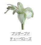 プリザーブド/チューベローズ