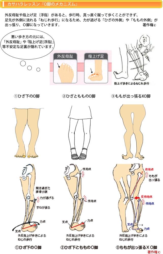 o脚のメカニズム