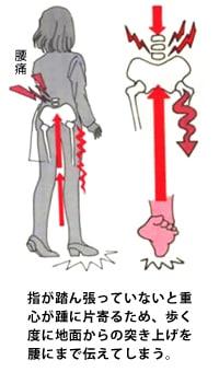 指が踏ん張っていないと重心が踵に片寄るため、歩く度に地面からの突き上げを腰にまで伝えてしまう。