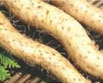 自然薯(じねんじょ)