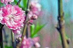 蜂蜜の栄養素と効能