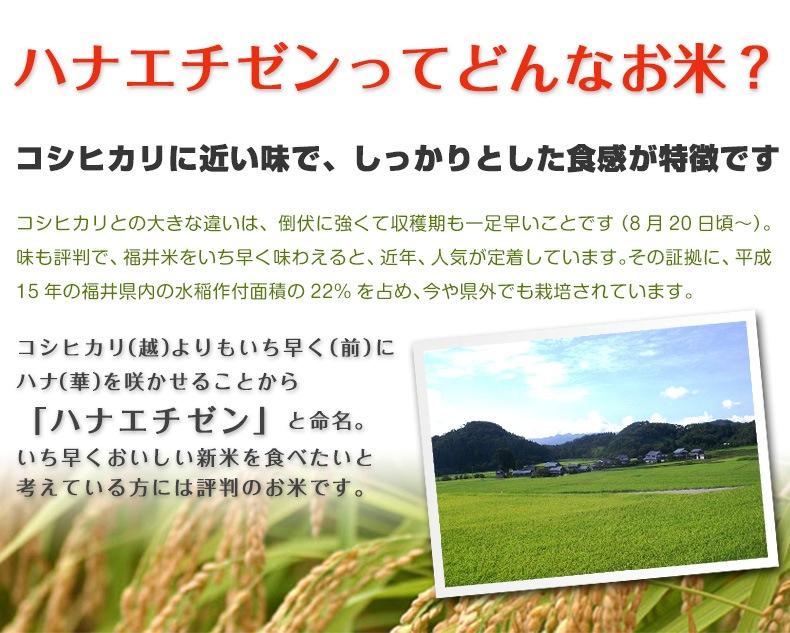 ハナエチゼンってどんなお米? コシヒカリに近い味で、しっかりとした食感が特徴です コシヒカリとの大きな違いは、倒伏に強くて収穫期も一足早いことです(8月20日頃〜)。味も評判で、福井米をいち早く味わえると、近年、人気が定着しています。その証拠に、平成15年の福井県内の水稲作付面積の22%を占め、今や県外でも栽培されています。コシヒカリ(越)よりもいち早く(前)にハナ(華)を咲かせることから「ハナエチゼン」と命名。いち早くおいしい新米を食べたいと考えている方には評判のお米です。