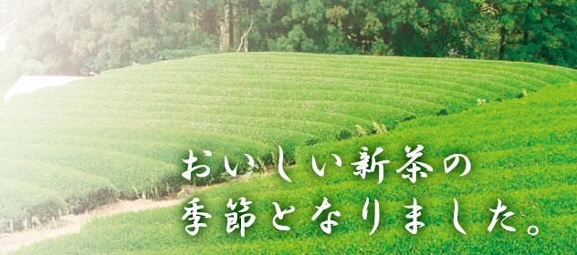 遠州 森の茶