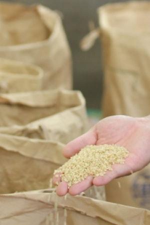 玄米を愛でる