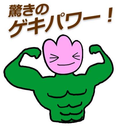 ゲキハナオリジナル!お花元気商品!