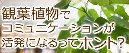 観葉植物でコミュニケーションが活発になるってホント?