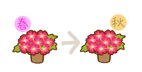 バーベナ開花時期