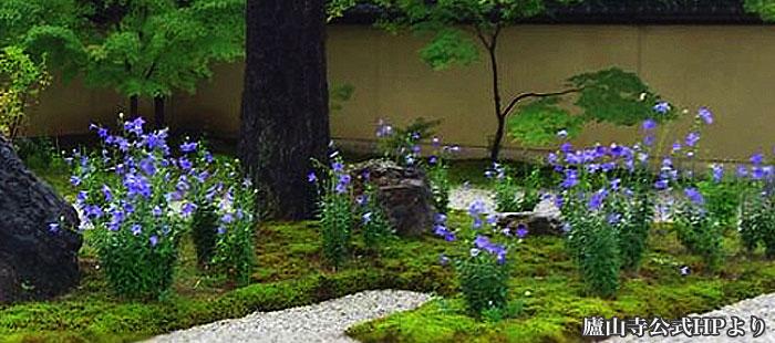廬山寺(ろざんじ)庭園