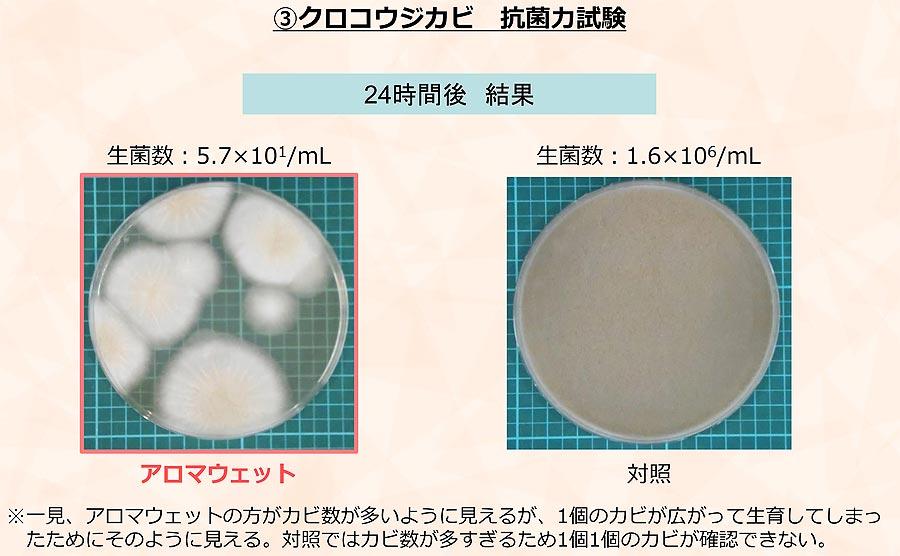クロコウジカビ抗菌力試験
