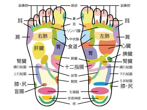足の親指のツボの痛み 1)脳のツボ 脳のツボは親指にあり、睡眠不足やストレス、パソコンやスマートフォンをよく使う人は 親指が固く、圧すと痛みを感じます。