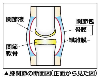 膝関節の断面図