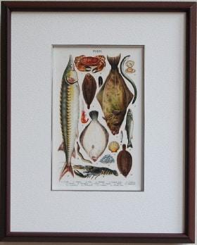 魚の絵 ビートン夫人 茶色の額
