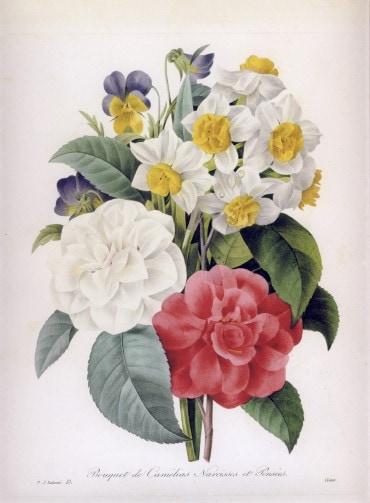 ルドゥーテ「カメリアの花束」 椿の絵, カメリアの絵, ブーケ, パンジー, スイセン