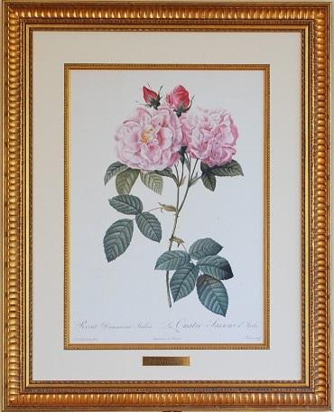 ルドゥーテ バラの絵 イタリアのダマスクローズ