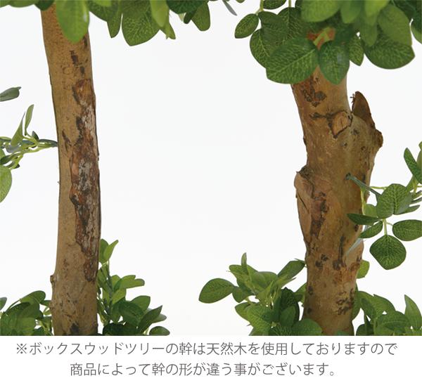ボックスウッドツリー