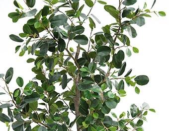 人工観葉植物フランスゴムの木2100の葉