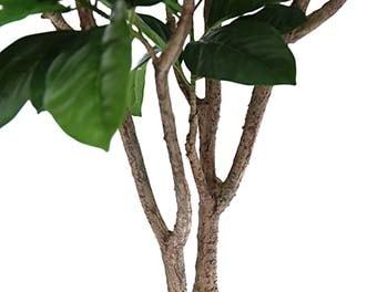 人工観葉植物ピンポンの木1800根本
