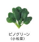 ピノグリーン(小松菜)