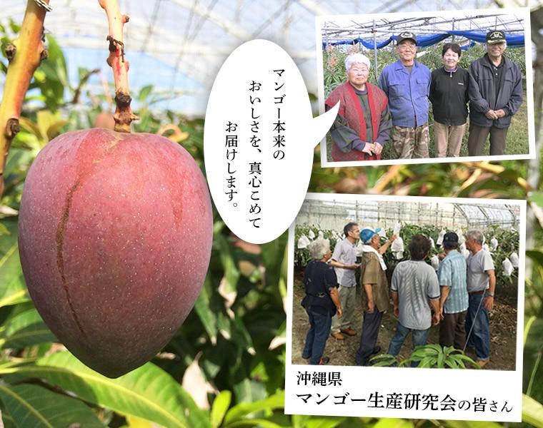 沖縄マンゴー生産研究会の皆さん