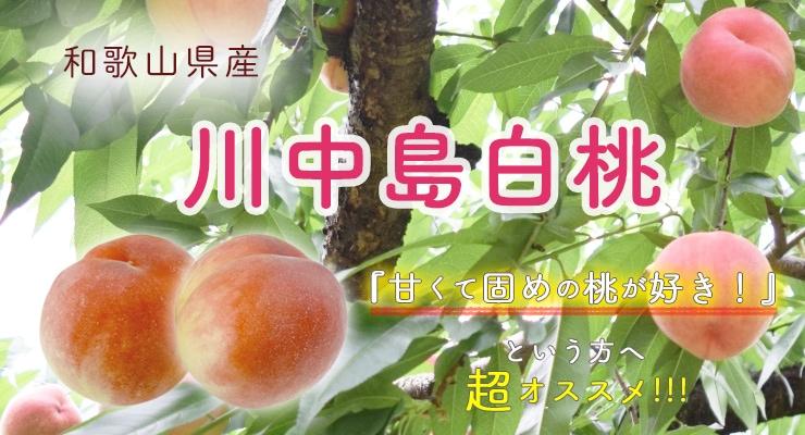 和歌山県産川中島白桃