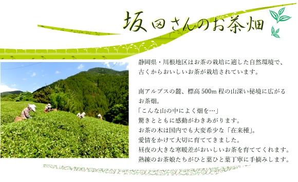 無農薬無化学肥料お茶畑