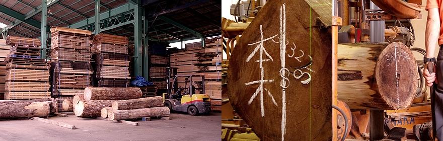 製材所の広い敷地には、ウォールナット以外にもたくさんの木材が保管