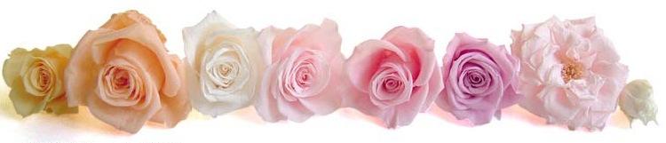 エレガントでシックなバラとナチュラルな花たち|花ガーデン(花garden)
