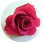 深みあるピンクのストロベリー|花ガーデン(花garden)