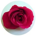 フランス語で木苺のフランボワーズ|花ガーデン(花garden)